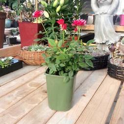 5 Pieces Vertical Planter Potted Plant Flowerpot Nursery Pot