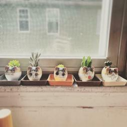 5Pack Mini Cat Ceramic Succulent Planter for Small Plants Po