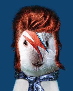 "Empire Art Direct Pets Rock ""Glam Rock"" Fine Art Giclee on C"