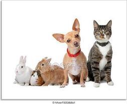 Group Of Pets Art Print Home Decor Wall Art Poster - G