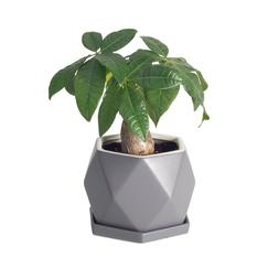 Hexagon Plant Pot With Drainage Hole for Home Office Deco