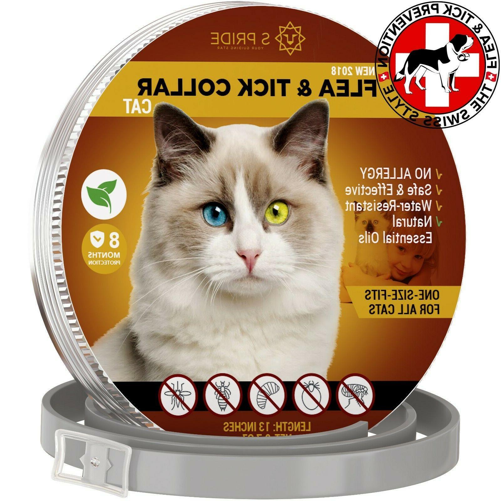 cat flea collar pet essential oil pest