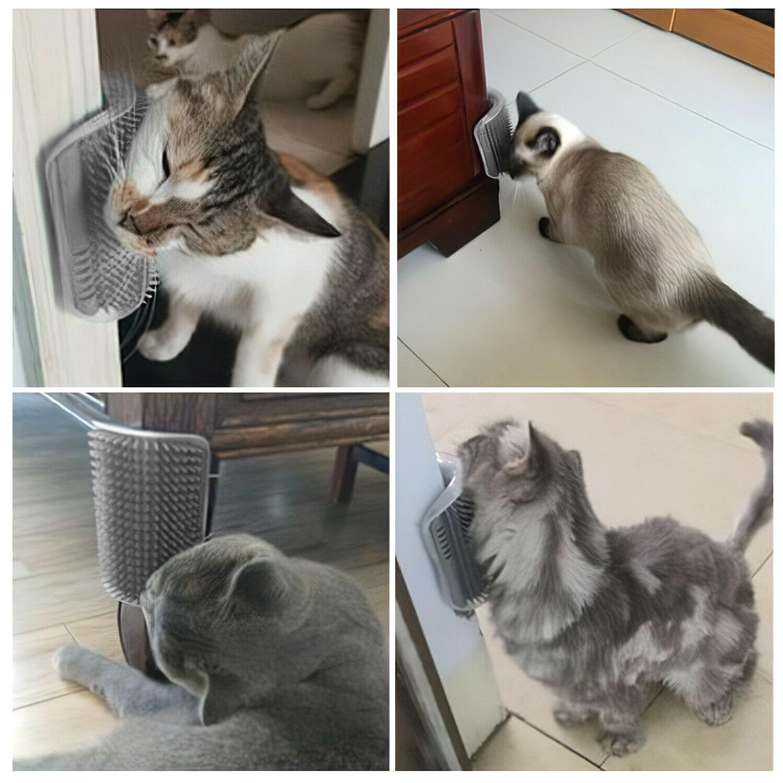 Cat Brush Massage Catnip
