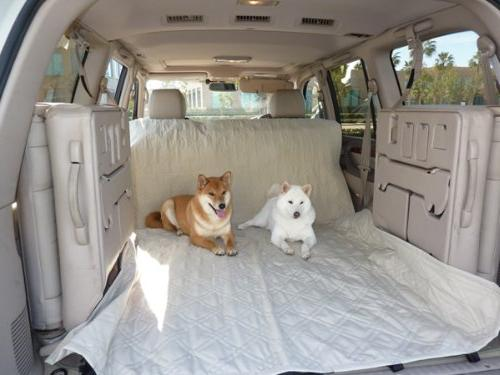 """Formosa Covers Padded Dog Car Fabric Best for Truck and SUV - with Your Pet Mess Free - 56"""""""