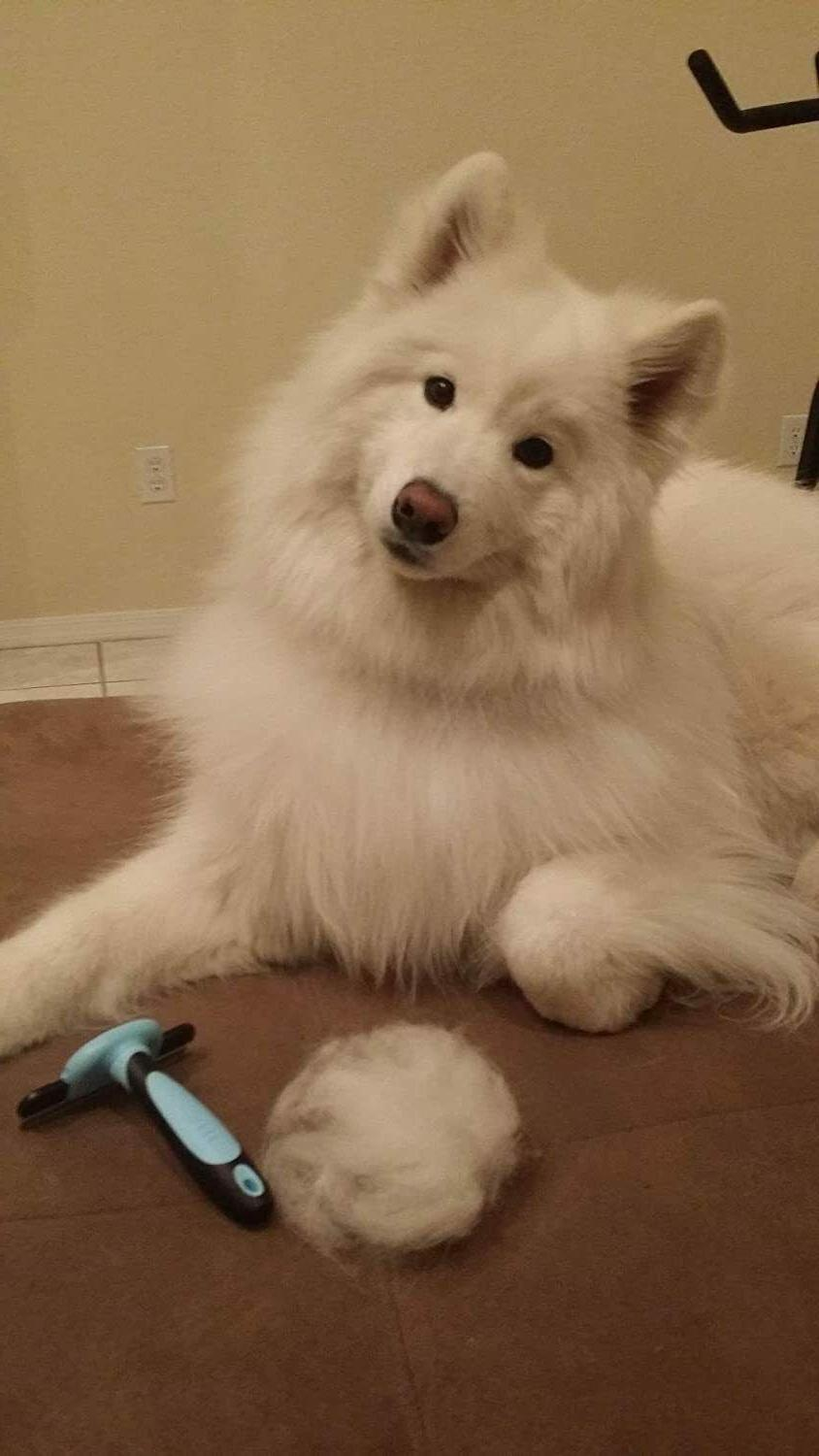 Grooming For Dog Cat Reduce Hair