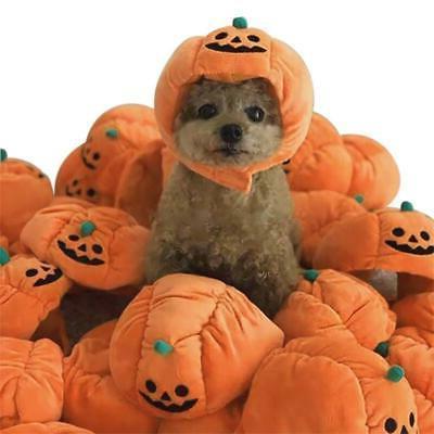 Halloween Pet Cat Pumpkin Hat Halloween Headwear Dress