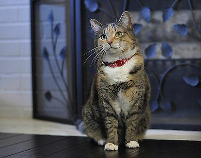 magnetic safe cat collar 12 free shipping