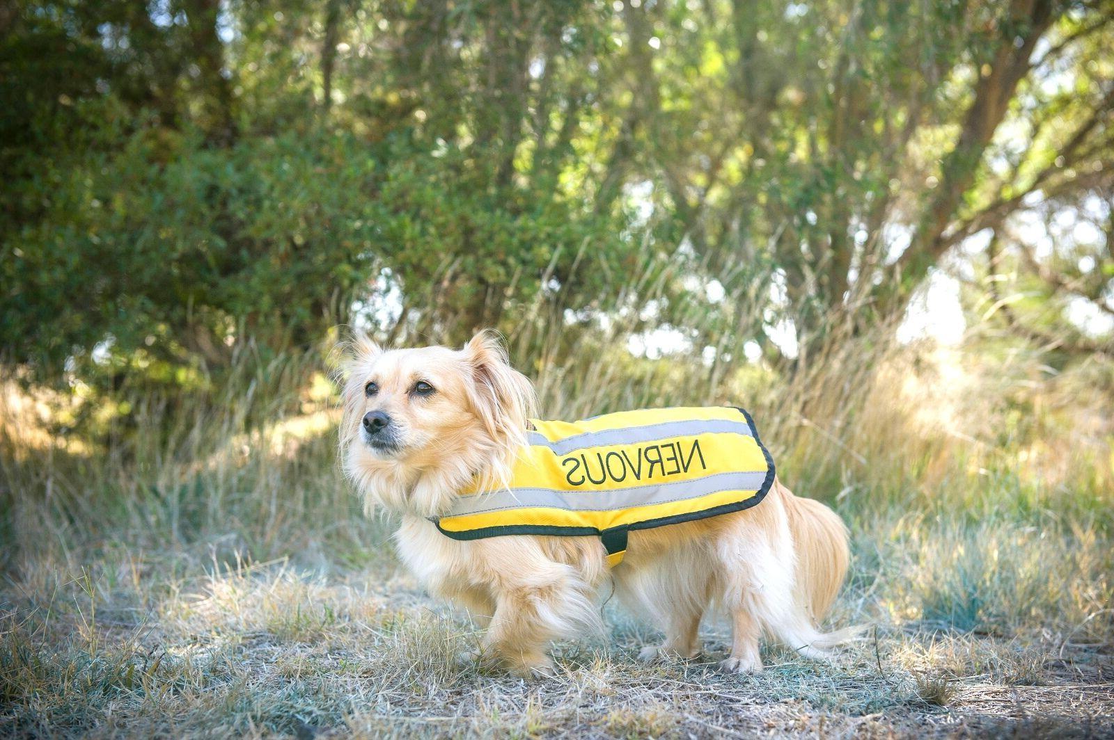 NERVOUS Yellow Non Pull Waterproof Pet Vest Harness 6 Foot