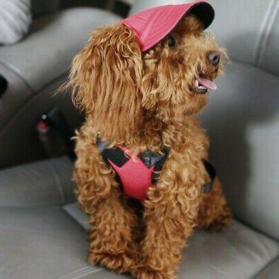 Outdoor Dog Cat Baseball Puppy Outdoor Caps