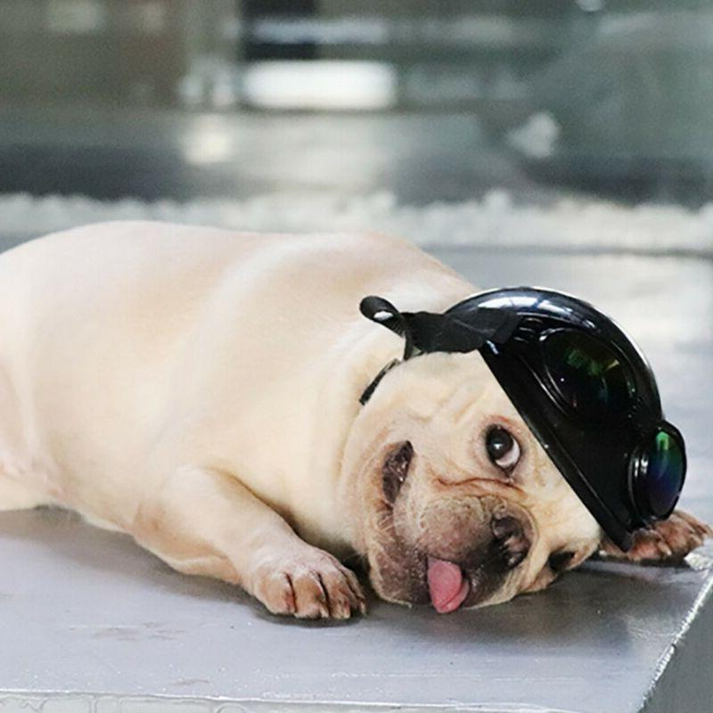 Cap Doggie Puppy Bike Motorcycle Hat Plastic