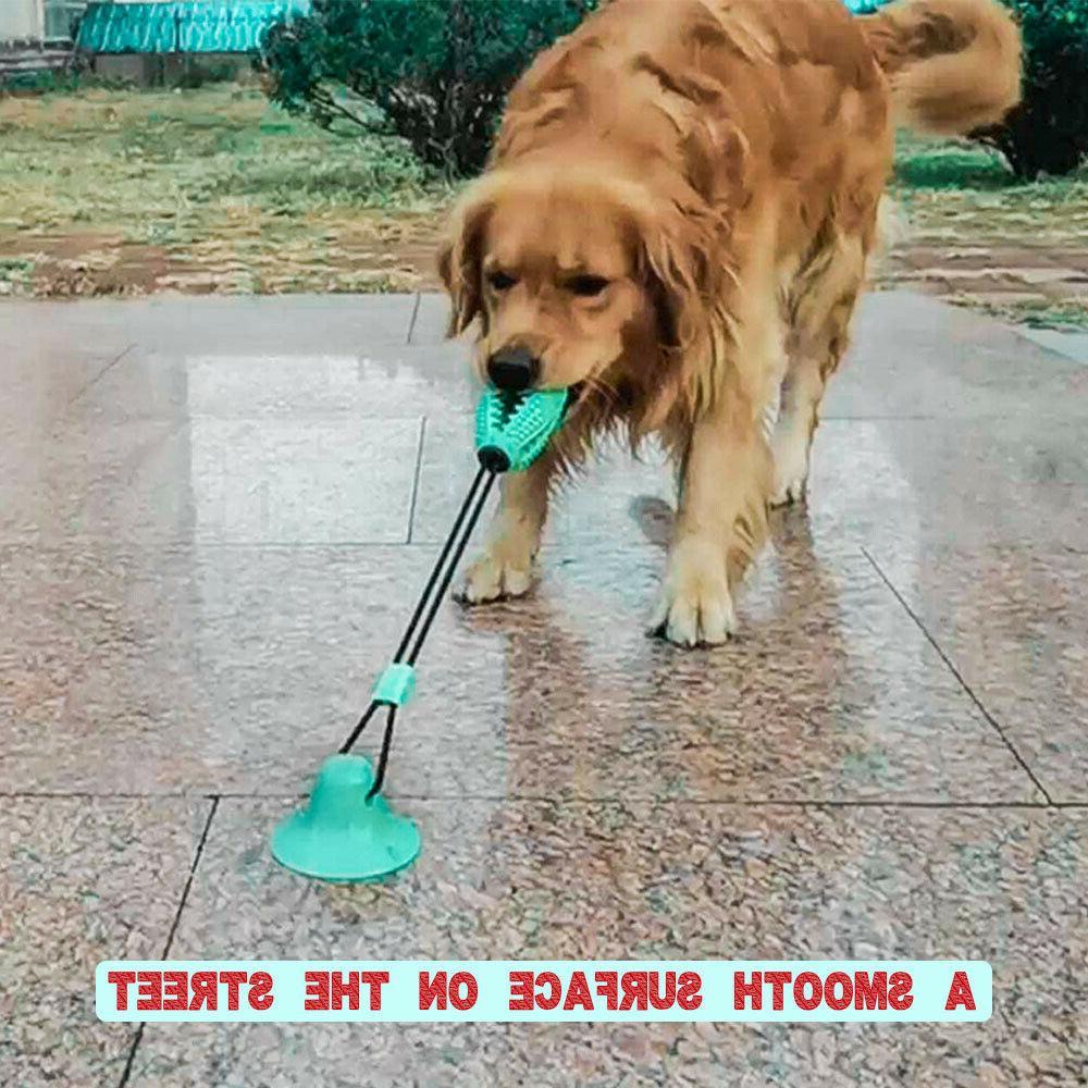 pet molar bite chew toy dog tug