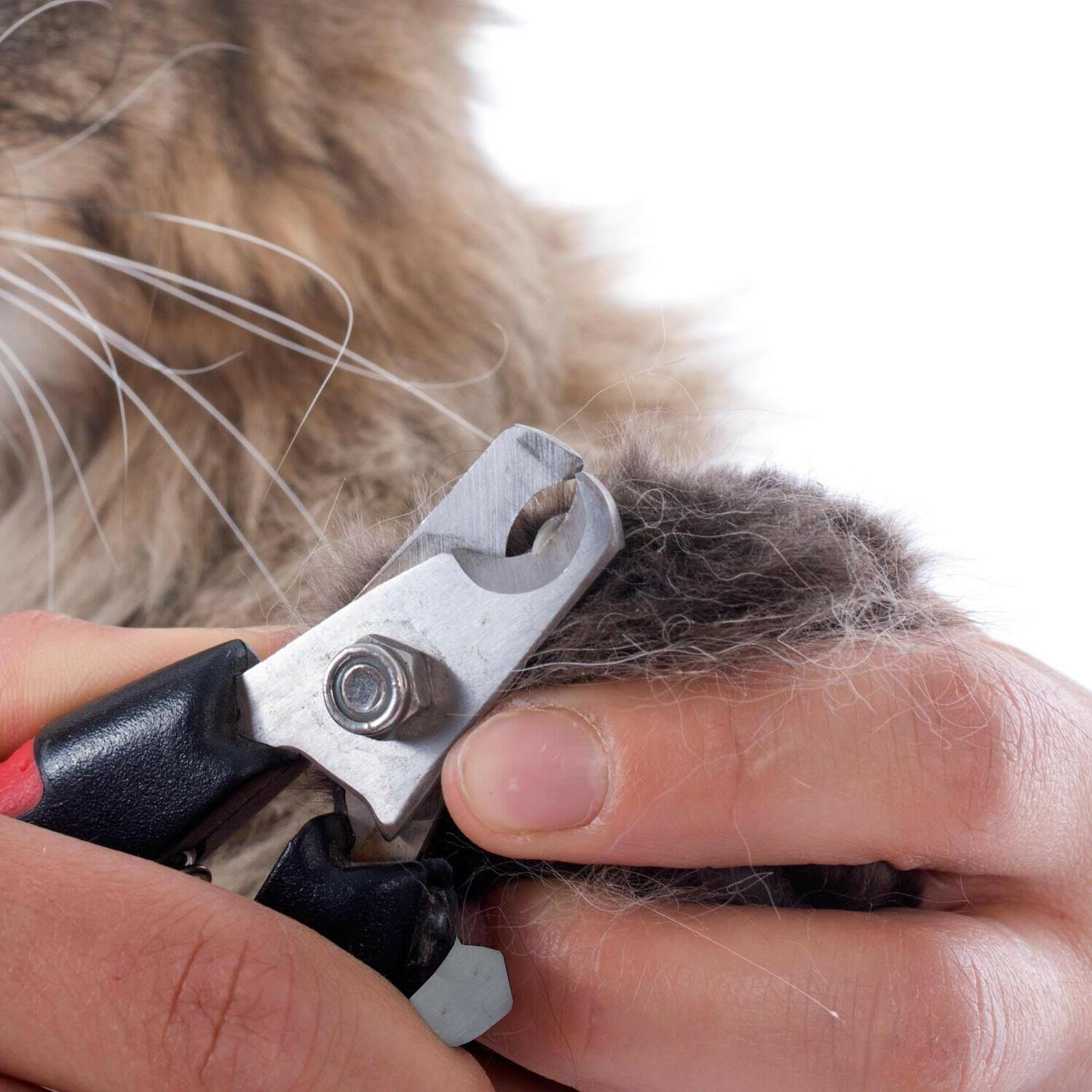 Heavy Duty CLIPPERS For Pets DOGS Thick Toenail