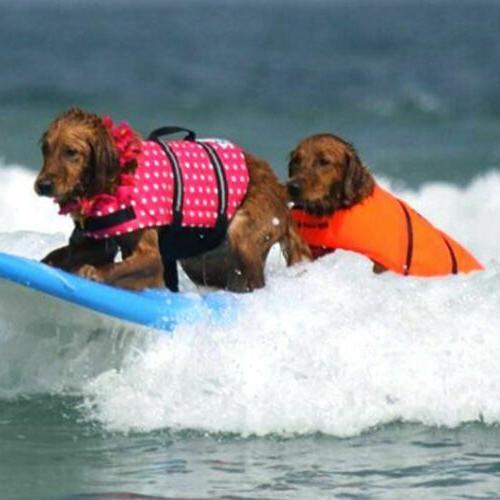 Pet Dog Stripe US