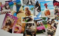 Lot of 12 - PET LOVERS Avanti Greeting Cards BIRTHDAY Dog, C