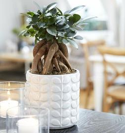 Orla White Ceramic Plant Pot Planter for home or office 10.5