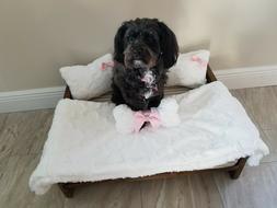 Pet / Dog Bed Custom Handmade Soft & Fluffy USA Small-Medium
